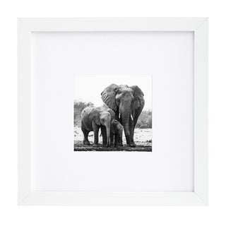 8 x 8-inch White Picture Frame for 4 x 4-inch Pictures with Mat or 8 x 8-inch Pictures Without Mat