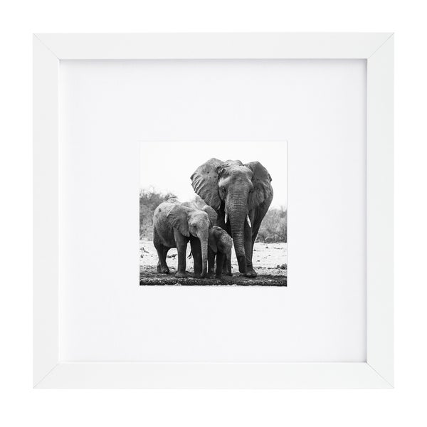 Shop 8 x 8-inch White Picture Frame for 4 x 4-inch Pictures with Mat ...
