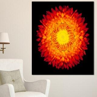 Designart 'Everlasting Straw Flower on Black' Flowers Canvas Wall Artwork
