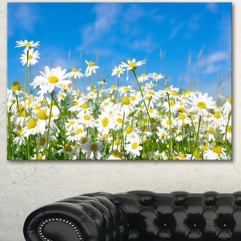 Designart 'White Daisies under Bright Blue Sky' Extra Large Floral Canvas Art
