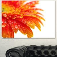 Designart 'Orange Gerbera with Raindrops' Extra Large Floral Canvas Art - Orange