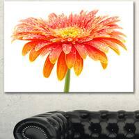 Designart 'Large Orange Gerbera on White' Extra Large Floral Canvas Art