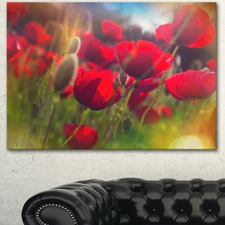 Designart 'Thick Red Poppy Flowers ' Extra Large Floral Canvas Art