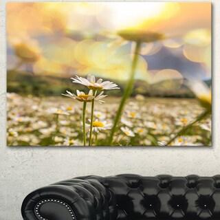 Designart 'Amazing Chamomile Flower Field' Extra Large Floral Canvas Art