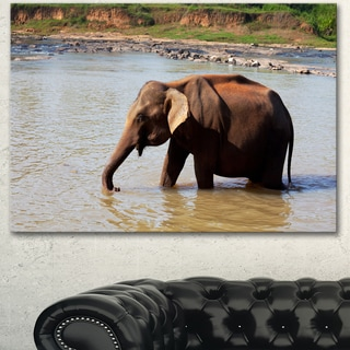 Designart 'Elephant in Water in Sri Lanka' Extra Large African Art Print