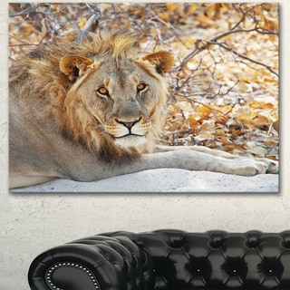 Designart 'Solitary Lion Taking Rest in Forest' African Canvas Artwork