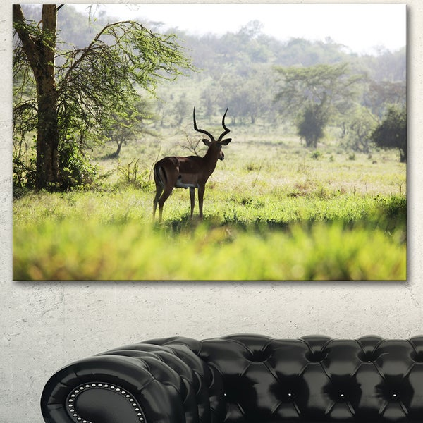 Shop Designart 'Solitary Antelope In Green Park' African