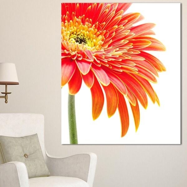 Designart 'Orange Gerbera on White Background' Modern Flower Canvas Art Print - Orange