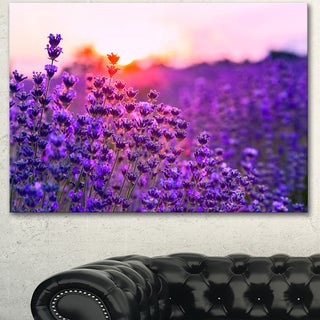 Designart 'Summer Sunset over Lavender Field' Large Floral Canvas Art Print - Purple