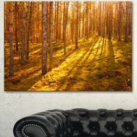 Designart 'Beautiful Sunrays in Thick Forest' Modern Forest Canvas Art - GOLD