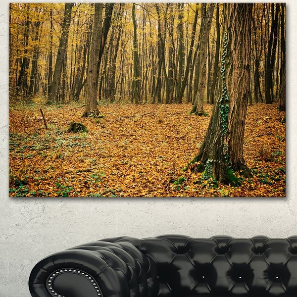 Designart 'Beautiful Autumn Forest in Mountains' Modern Forest Canvas Art - Brown
