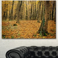 Designart 'Beautiful Autumn Forest in Mountains' Modern Forest Canvas Art - Brown