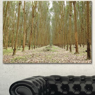Designart 'Rubber Trees Row in Thailand' Modern Forest Canvas Art