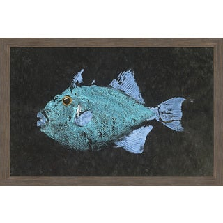 Marmont Hill - 'Triggerfish' by Warren Sellers Framed Painting Print