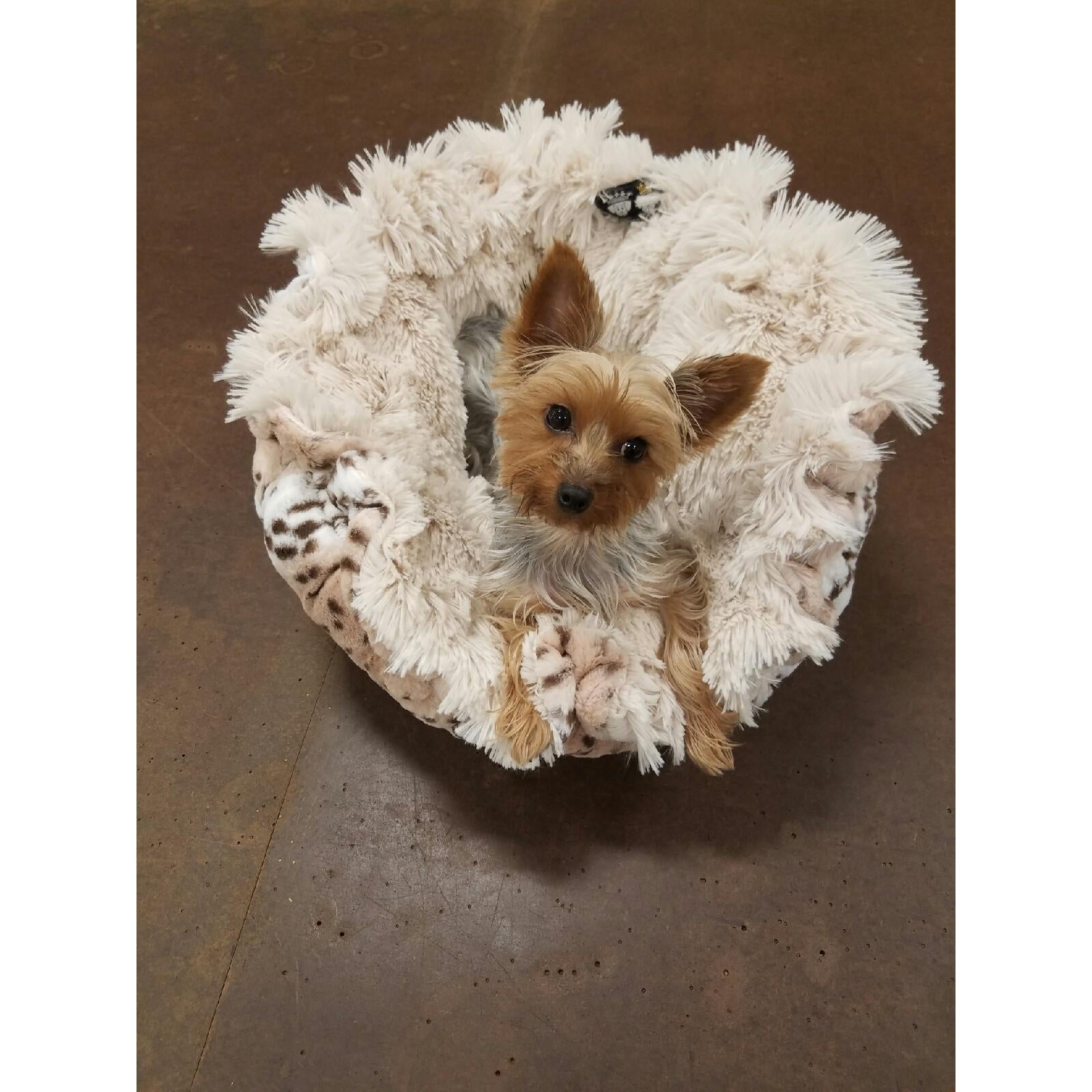 Blondie, Aspen Snow Leopard Pet Bed-in-a-Blanket (Snow Le...
