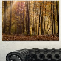 Designart 'Dense Forest in Rays of Rising Sun' Large Forest Canvas Art - Brown