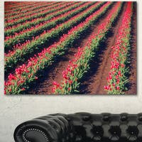 Designart 'Beautiful Field of Red Tulip Flowers' Large Landscape Canvas Art
