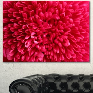 Designart 'Pink Aster Flower Petals Close-up' Large Floral Canvas Artwork