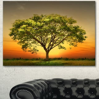 Designart 'Green Tree against Setting Sun' Modern Trees Canvas Wall Art - Green
