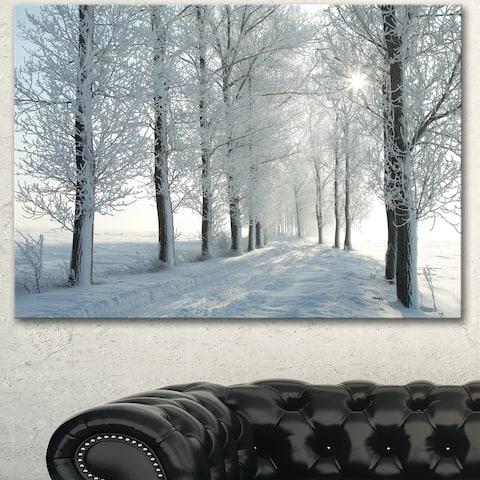 Designart 'Winter Trees Backlit by Morning Sun' Large Forest Artwork Canvas - White
