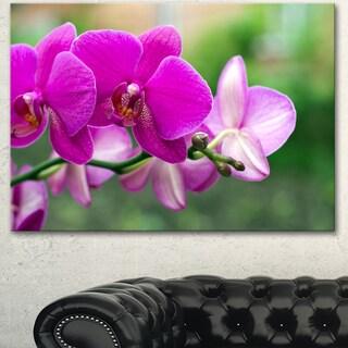 Designart 'Beautiful Orchid Flowers on Green' Modern Flower Canvas Wall Artwork