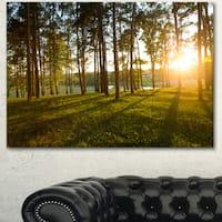 Designart 'Bright Sunlight in Dense Forest' Large Landscape Canvas Art - Green