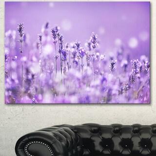 Designart 'Stunning Purple Lavender Field ' Landscape Artwork Canvas Print