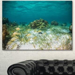 Designart 'School of Grunts with Baracuda' Seashore Art Print on Canvas