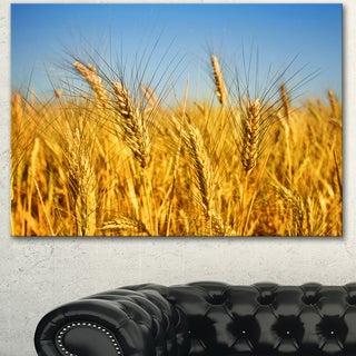 Designart 'Bright Golden Wheat Field' Landscape Wall Art Print Canvas