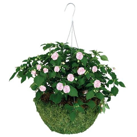 "Gardman R475 14"" Sphagnum Moss Hanging Basket"