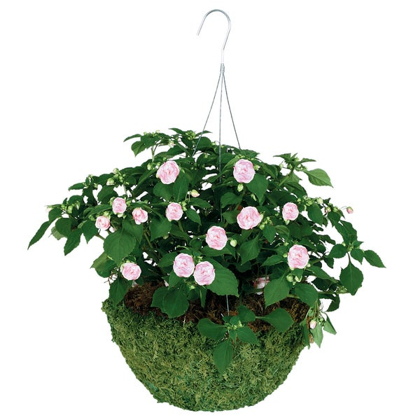 "Gardman R475 14"" Sphagnum Moss Hanging Basket. Opens flyout."