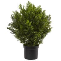 2-foot Indoor/Outdoor Cedar Bush