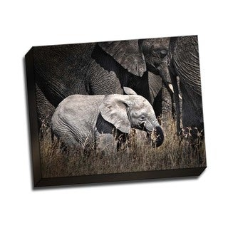 Picture It on Canvas 'Baby Elephant I' Gallery Wrapped Art