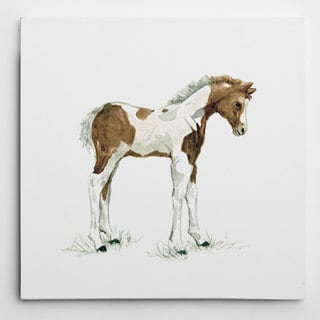 Wexford Home Carol Robinson 'Baby Colt' Premium Gallery-wrapped Giclee Canvas