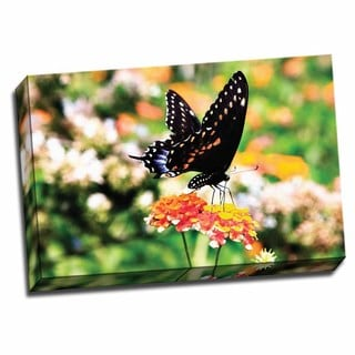 Picture It on Canvas 'Giant Swallowtail' 24 x 16 Gallery Wrapped Art