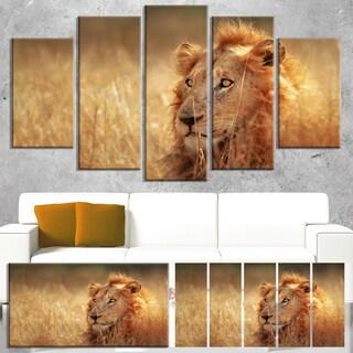 Designart 'Relaxing Lion in Grassland' African Canvas Artwork