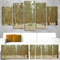 Designart 'Rubber Trees Row in Thailand' Modern Forest Canvas Art