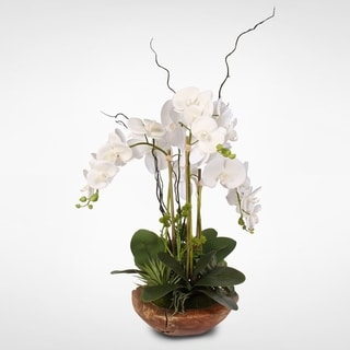 Real Touch Phalaenopsis Silk Orchid with Curly Willow in Natural Teak Wood Bowl