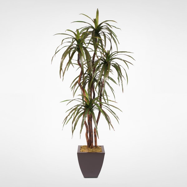 Silk 6-foot Yucca Tree with Natural Wood Trunk in Metal Pot