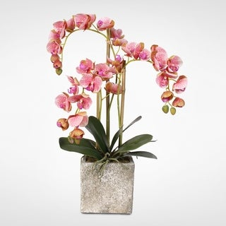 Real Touch Butterfly Orchids in Moss Green-finished Cement Pot