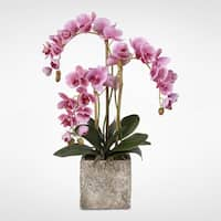 Real Touch Phalaenopsis Orchids in Moss Green Finish Cement Pot
