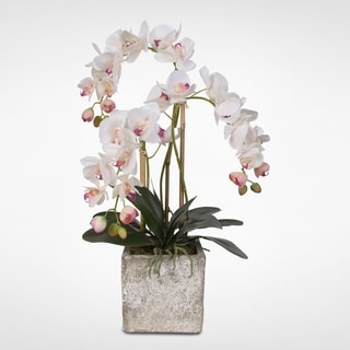Real Touch Phalaenopsis Orchids in Cement Pot with Moss Green Finish