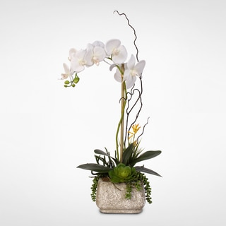 Real Touch Phalaenopsis Silk Orchid with Succulents in a Cement Pot