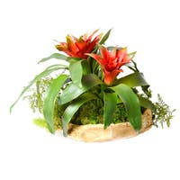 Faux Bromeliad in Hand-carved Wood Bowl