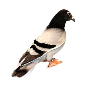 Hansa Pigeon Plush Toy