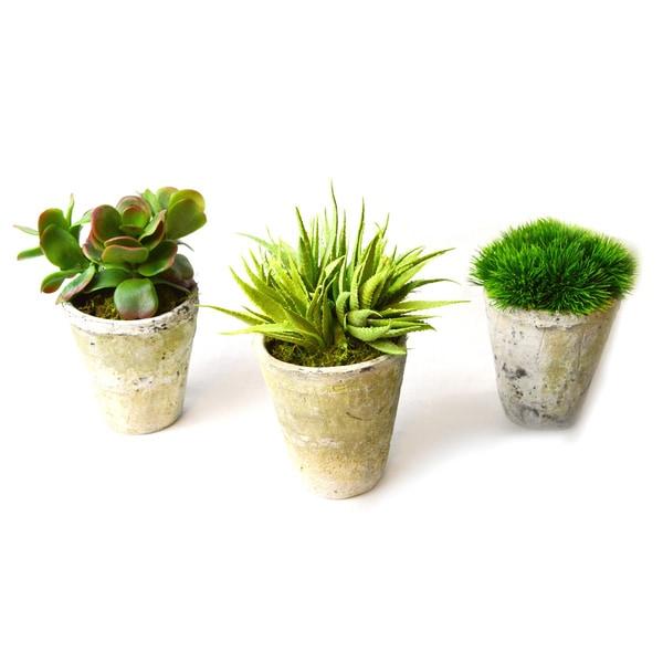 3-piece Large Succulents in Aged Pots Set