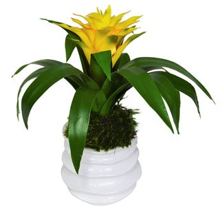 Bromeliad in White Ceramic Container