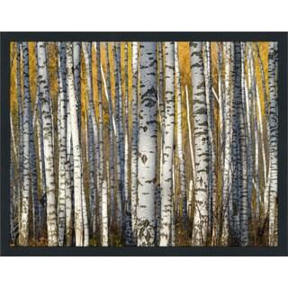 """Birch Trees"" Framed Plexiglass Wall Art"