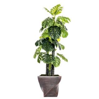 81.5-inch Indoor/Outdoor Monstera Ceriman in Fiberstone Pot