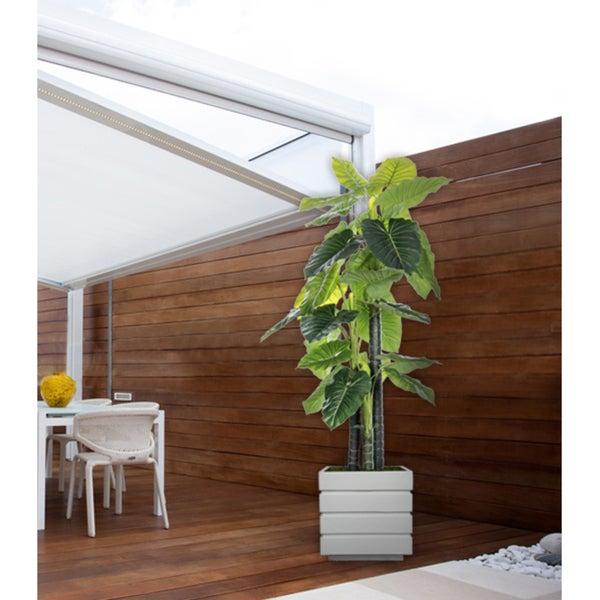 78-inch Indoor/Outdoor Elephant Ear Plant in Fiberstone Pot